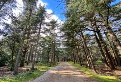 La Forêt des cèdres