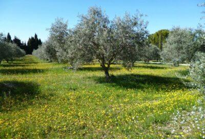 Moulin à huile d'olive et Domaine Oliversion