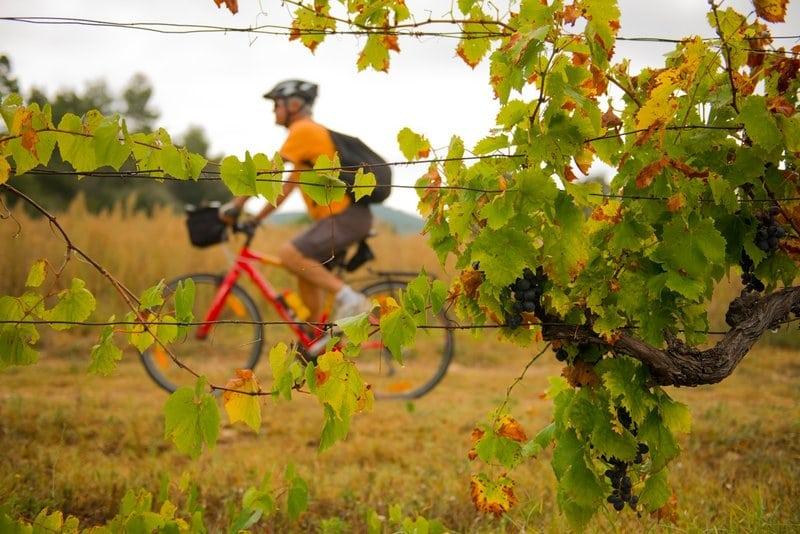 La vigne au gré des saisons à vélo
