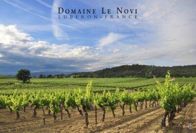 Domaine Le Novi