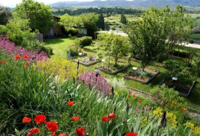 Jardin des plantes tinctoriale