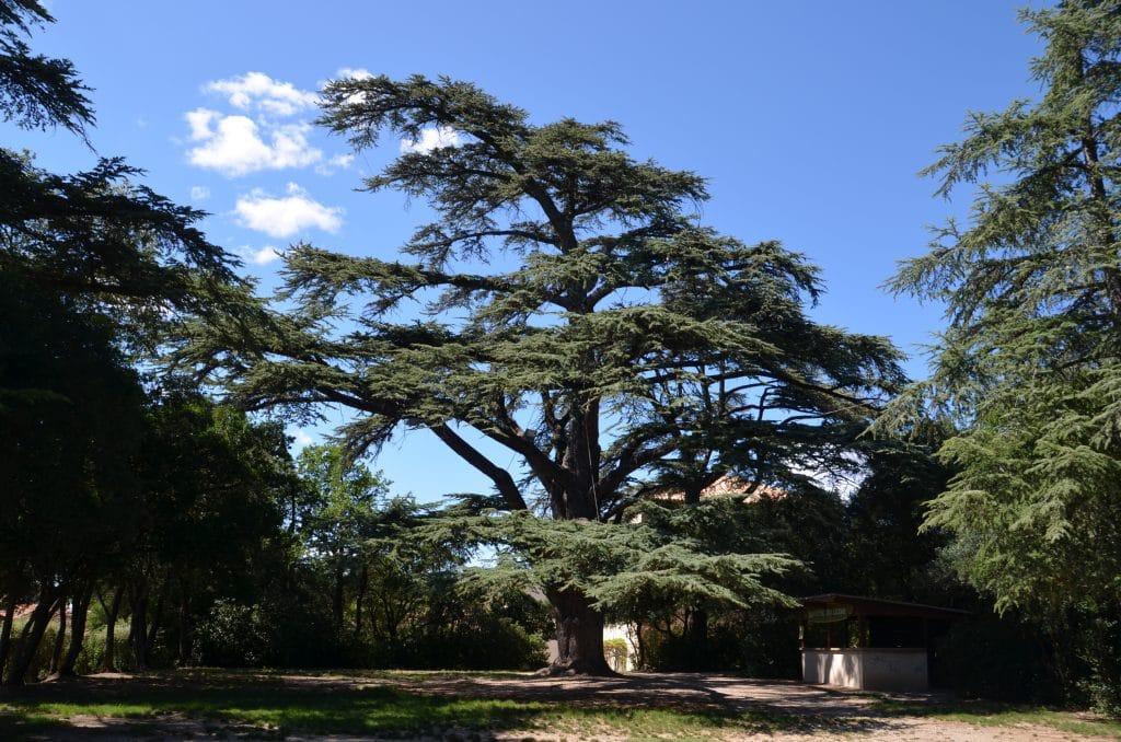 Parc du château Verdet Kléber