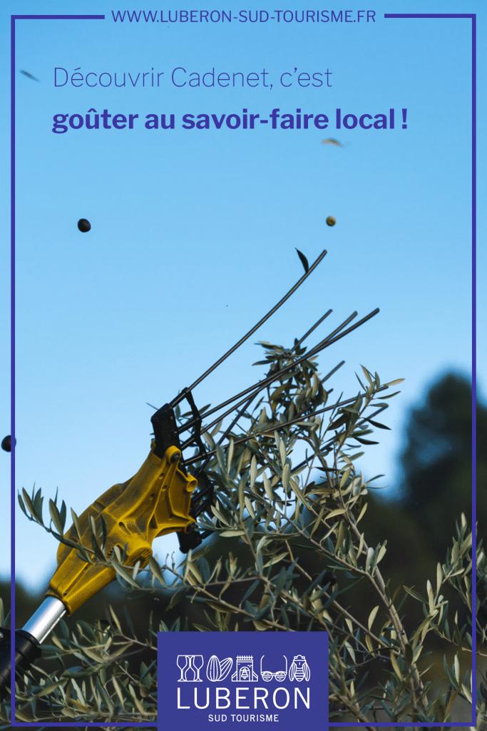 Cadenet savoir-faire local - huile d'olive