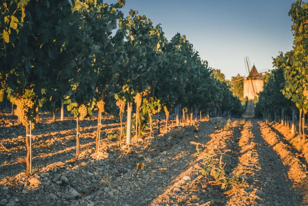 Vigne moulin sannes