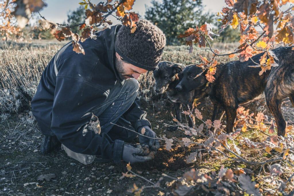 truffe noire provence