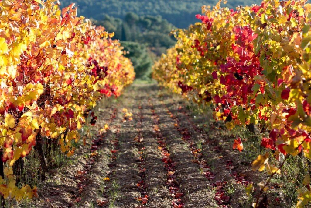 Vignes Vitrolles en Luberon