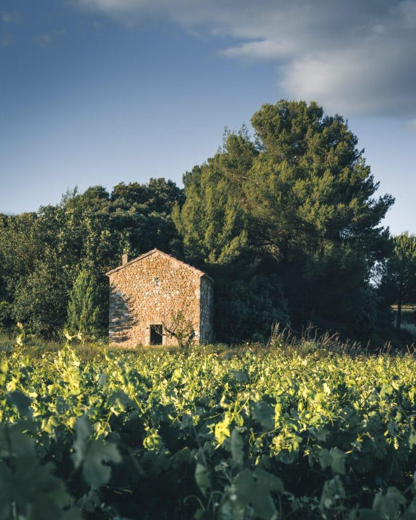 Typique cabanon dans les vignes