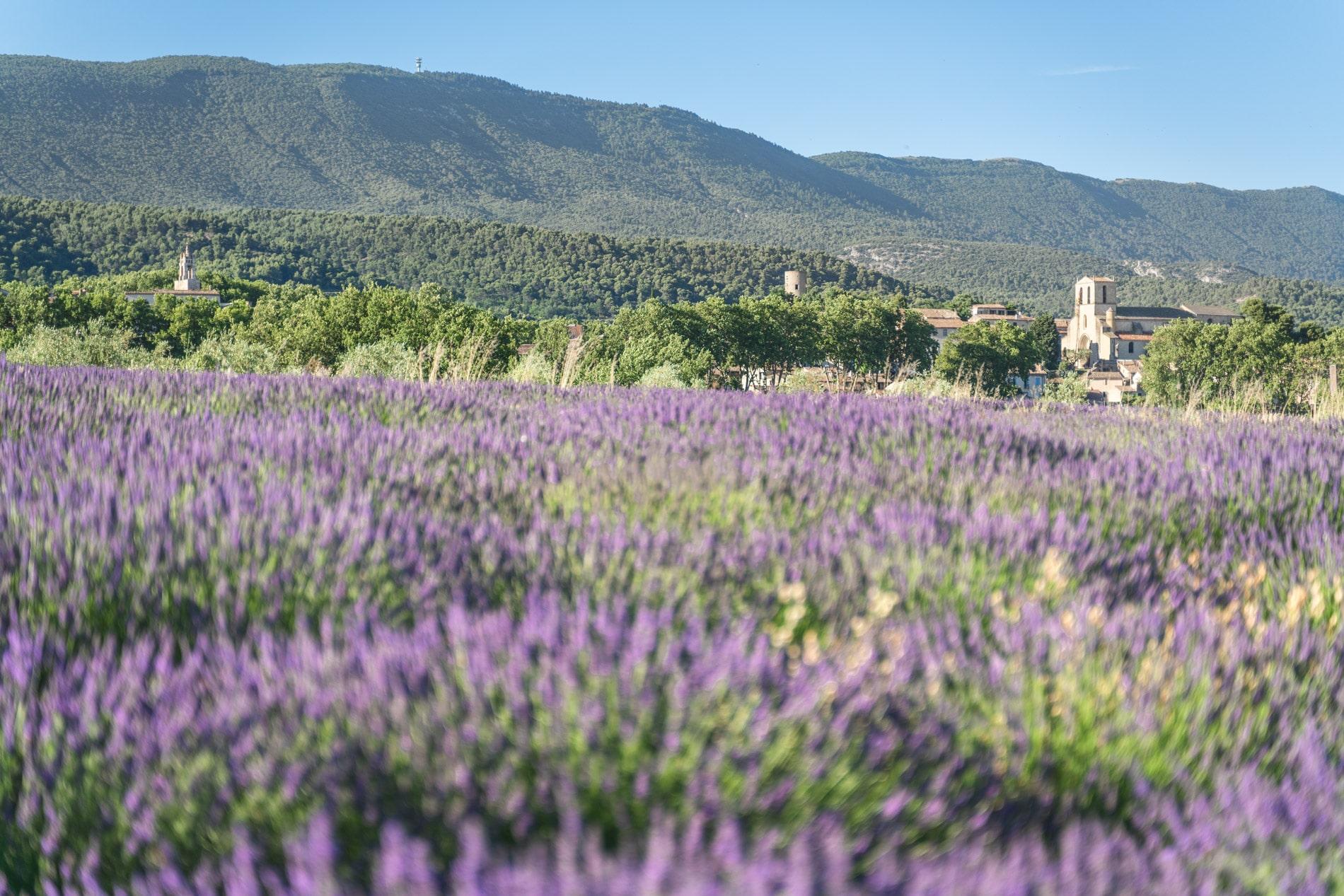 Cucuron et lavande-bienvenue-parc-naturel-regional-Luberon