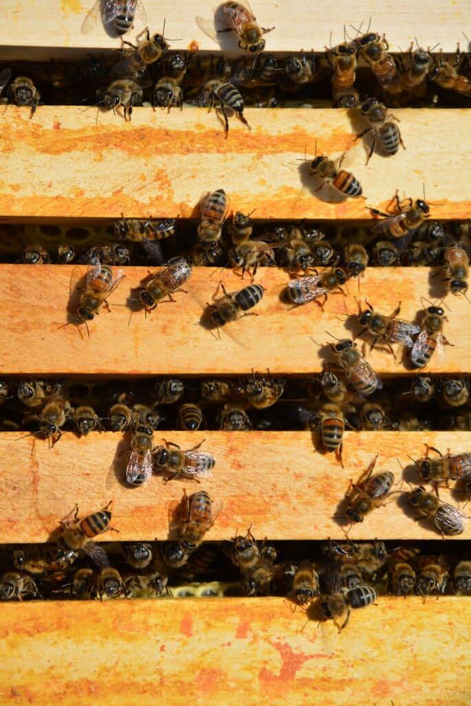 abeilles du luberon - produits apicoles