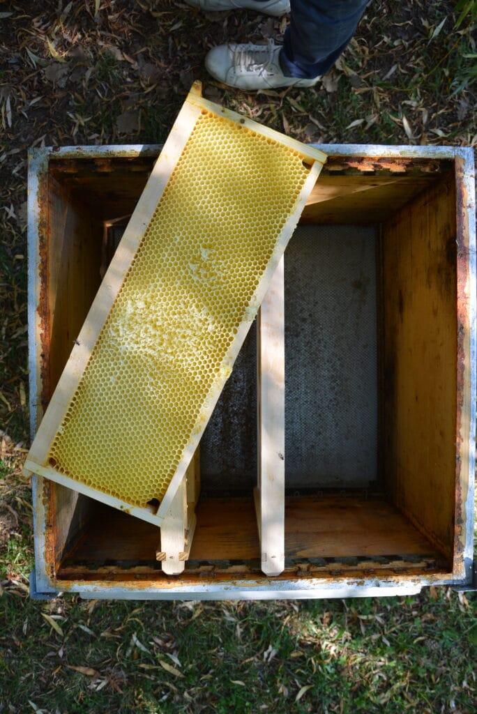 apiculture-miel-luberon