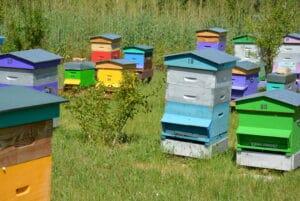 apiculture-sud-Luberon-miel
