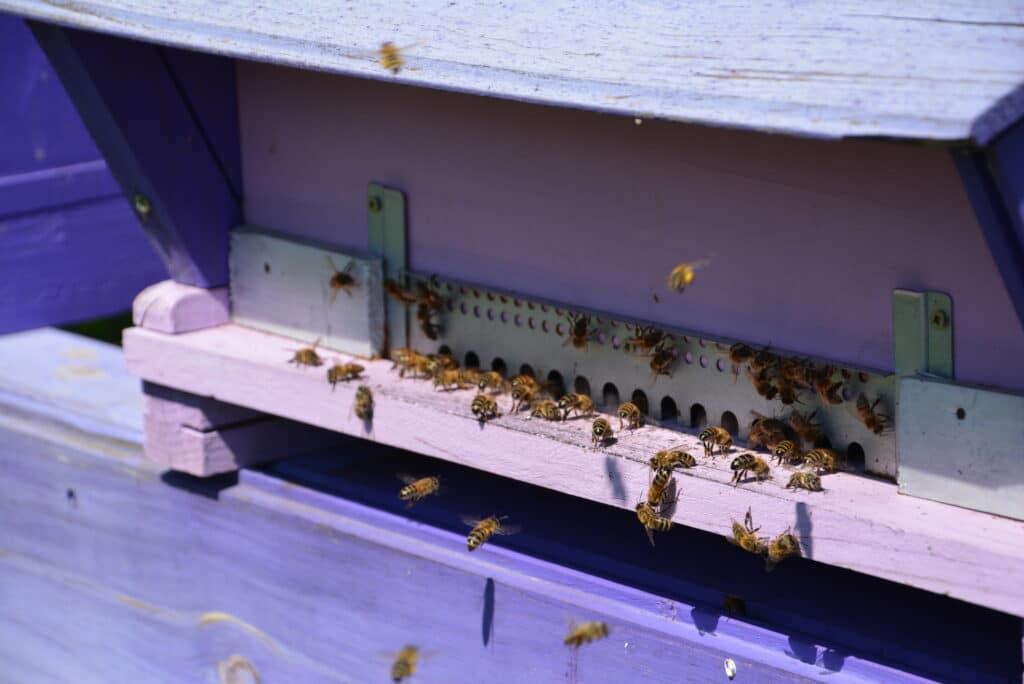 miel-trouver-sud-luberon
