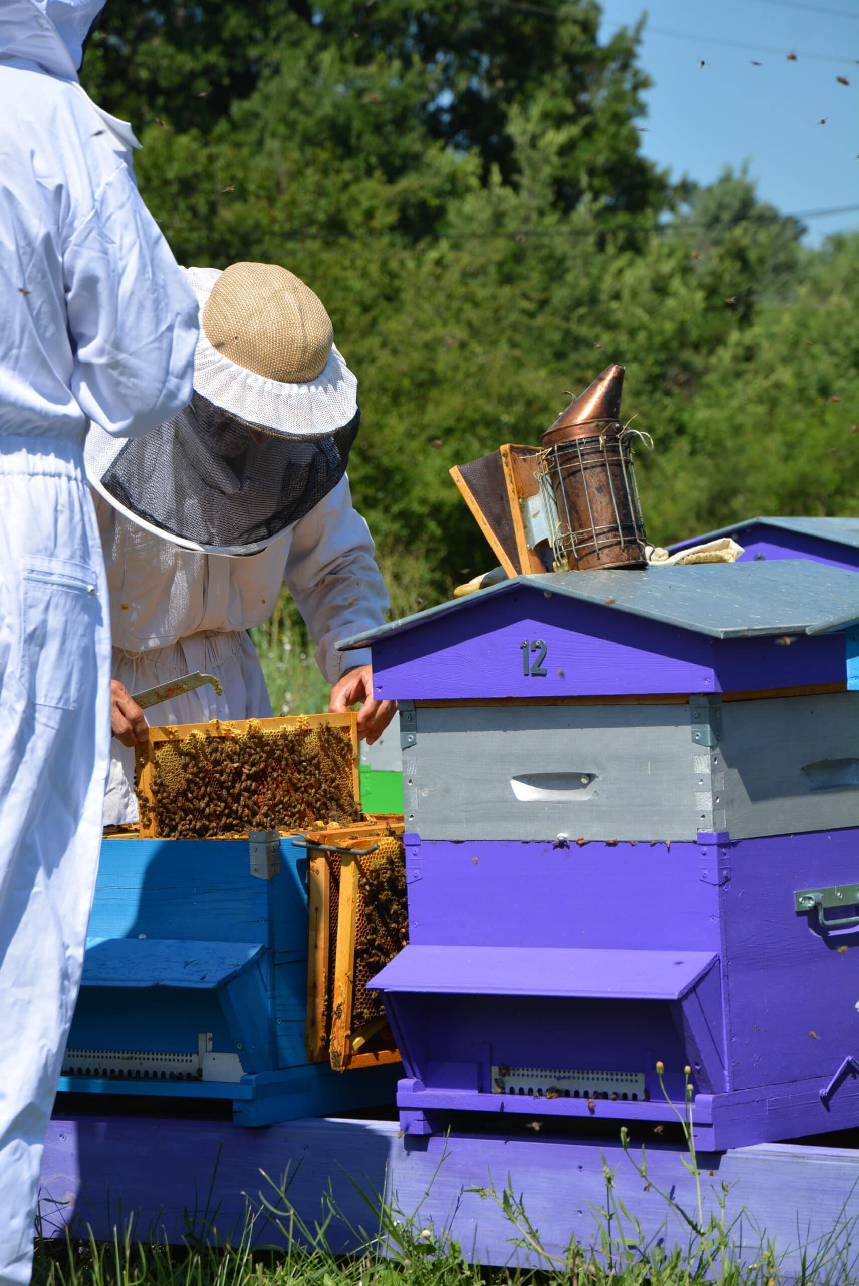 ruche-luberon-apiculture